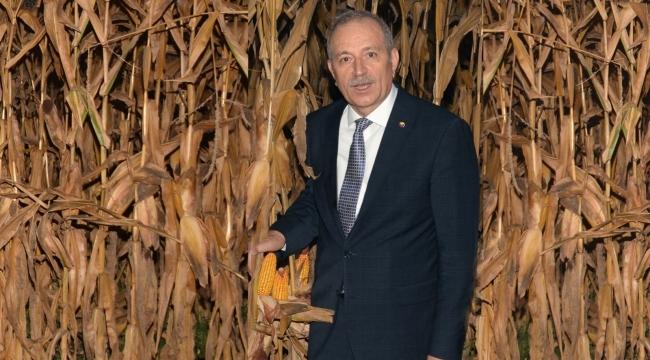 Çukurova'da mısır hasadı başladı