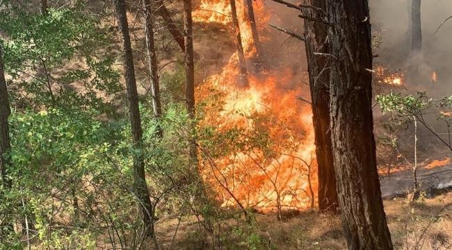 Kozan'da yangın erken müdahale ile söndürüldü