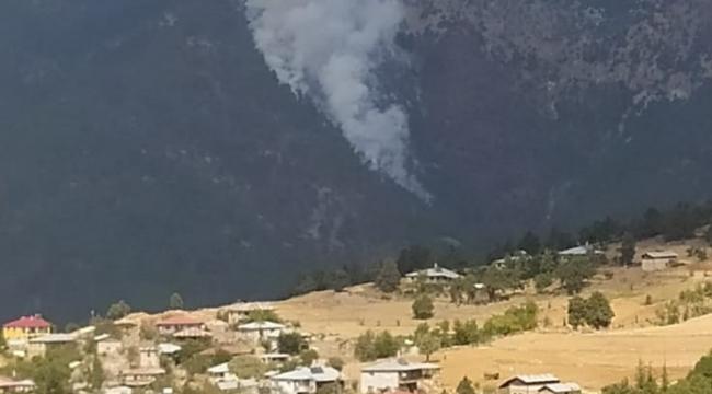 Saimbeyli'de orman yangını