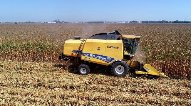 """""""Sarı altın""""da hasat başladı"""